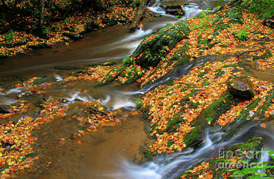 Photograph - Meeting Of The Creeks by Darren Fisher