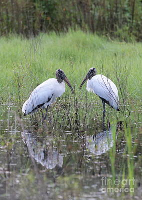 Stork Photograph - Meeting Of The Minds by Carol Groenen
