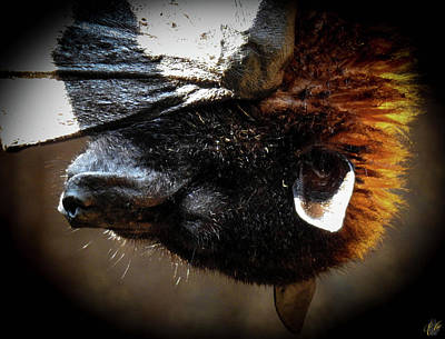 Photograph - Megabat, No. 3 by Elie Wolf