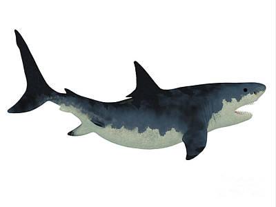 Megalodon Shark Over White Art Print by Corey Ford