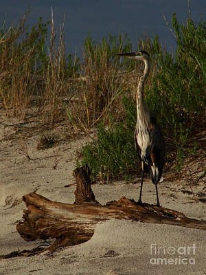 Photograph - Mein Heron by Mark Holbrook