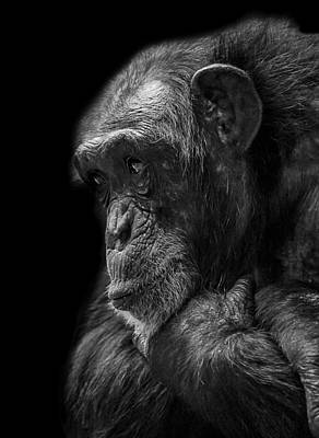 Chimpanzee Photograph - Melancholy by Paul Neville