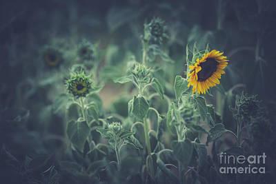 Photograph - Melancholy by Eva Lechner