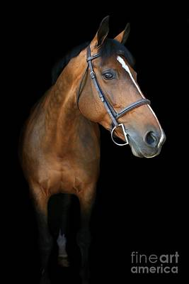 Photograph - Melissa-millie7 by Life With Horses
