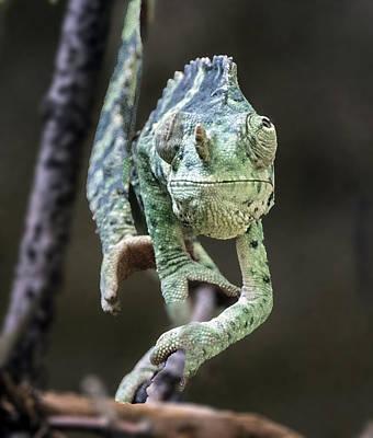 Photograph - Mellers Chameleon Portrait Headshot by William Bitman