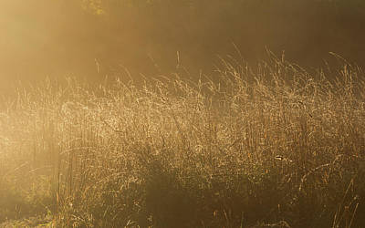 Photograph - Mellow Morning Meadow by Kathryn Bell