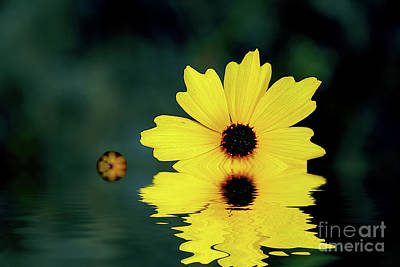 Photograph - Mellow Yellow by LaRoque Photography