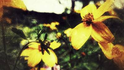 Photograph - Mellow Yellow by Yoursbyshores Isabella Shores