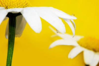 Photograph - Mellow Yellow by Lisa Knechtel