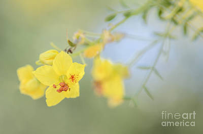 Photograph - Mellow Yellow by Tamara Becker