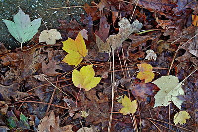 Photograph - Melody In Leaves by Michele Myers