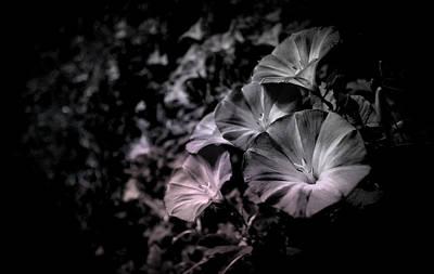 Photograph - Mel's Gray Garden by Marisela Mungia
