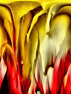Photograph - Melting Rose by Bob Wall