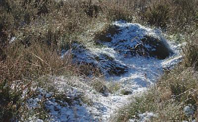 Melting Snow On Plants Art Print