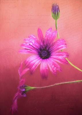 Painting - Memories Collected - Flower Art by Jordan Blackstone