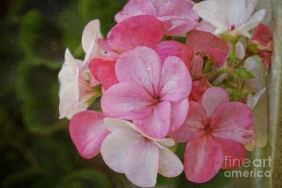 Photograph - Memories Of A Summer Garden by Mary Machare