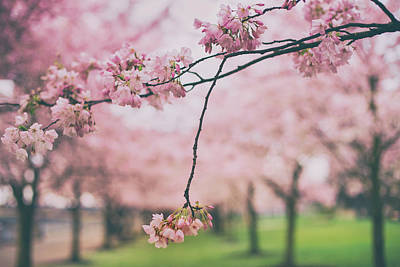 Photograph - Memories Of Spring by Kunal Mehra