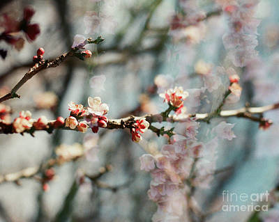 Photograph - Memory by Ana V Ramirez