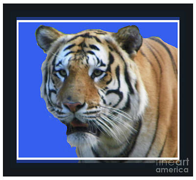 Photograph - Memphis Zoo Tiger by Shirley Moravec