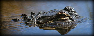 Photograph - Menacing Alligator by Kimberly Woyak