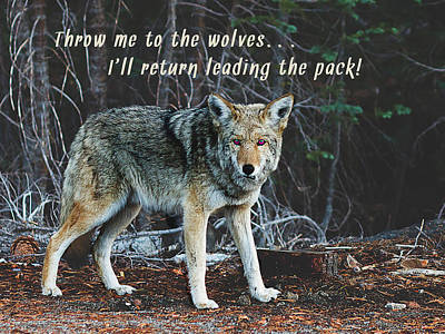 Positive Attitude Photograph - Menacing Wolf In The Woods Lead The Pack by Elaine Plesser