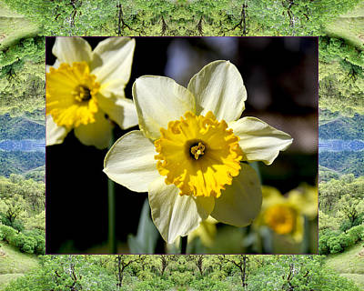 Photograph - Mendocino Daffodils by Bell And Todd