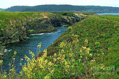 Photograph - Mendocino Headlands by Charlene Mitchell