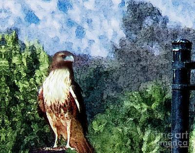 Art Print featuring the photograph Menifee Falcon by Rhonda Strickland