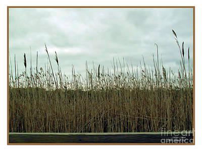 Photograph - Mentor Marsh by Joan  Minchak