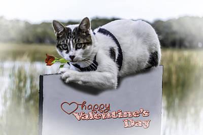 Photograph - Meow Valentine by Leticia Latocki