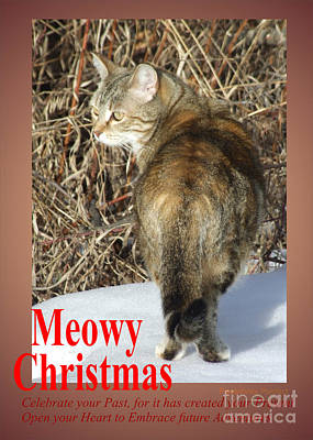 Photograph - Meowy Christmas by Marianne NANA Betts