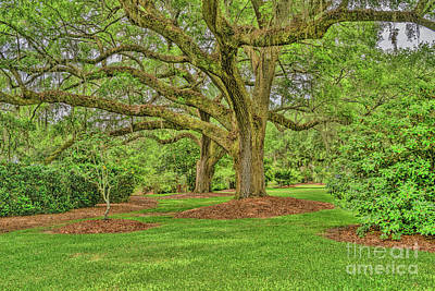 Photograph - Mepkin Abbey Garden by Elvis Vaughn