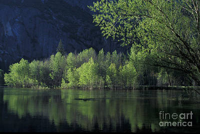 Photograph - Merced River Reflection by Stan and Anne Foster