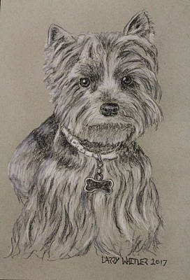 Drawing - Mercedes The Shih Tzu by Larry Whitler