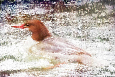 Photograph - Merganser Fishing In The Rain by Belinda Greb