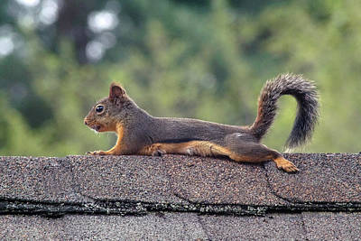 Photograph - Merle The Squirrel #1 by Ben Upham III