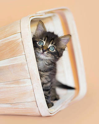 Photograph - Merlin Hiding In Basket by Kelly Richardson