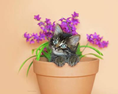 Photograph - Merlin In A Flowerpot by Kelly Richardson