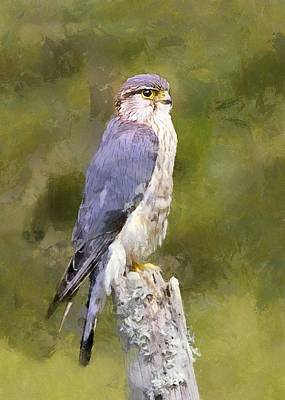 Thomas Kinkade Royalty Free Images - Merlin on a Mossy Stump Royalty-Free Image by Charmaine Zoe