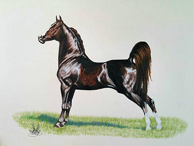 Drawing - Merriehill Chicagoan - Morgan Sire by Cheryl Poland