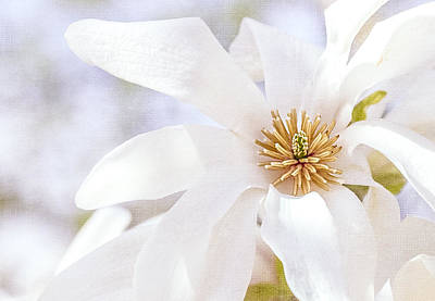 Photograph - Merrill Magnolia Bloom by Julie Palencia