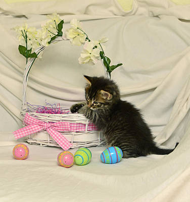 Photograph - Merry And Easter Basket #11 by Cindy McIntyre