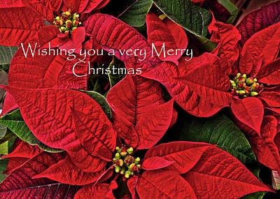 Photograph - Merry Christmas by Ann Bridges
