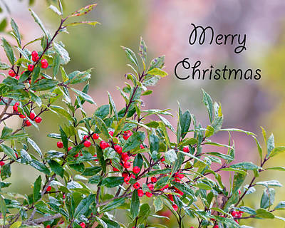 Photograph - Merry Christmas - Berries by Kerri Farley