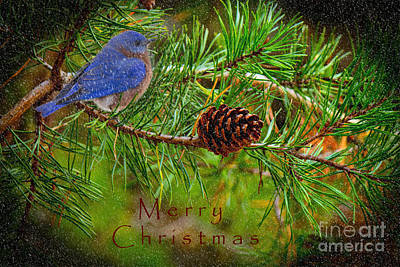Photograph - Merry Christmas Card With Bluebird by Sandra Clark