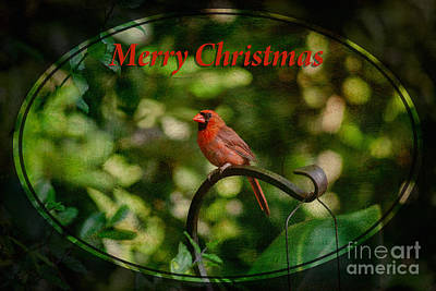 Photograph - Merry Christmas Cardinal by Diane Macdonald