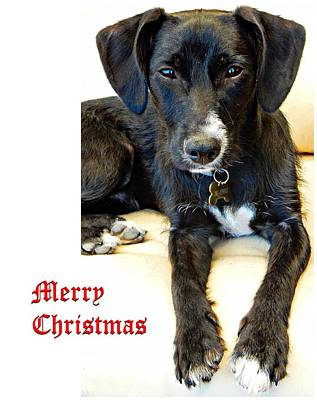 Photograph - Merry Christmas Dog by Dorothy Berry-Lound
