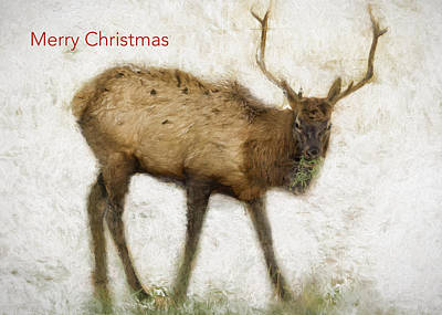 Photograph - Merry Christmas Elk Greeting Card by Belinda Greb