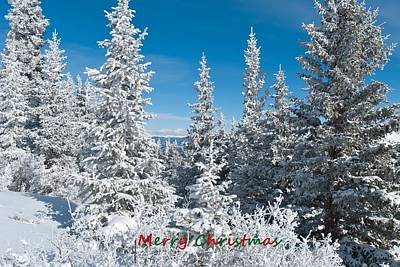 Photograph - Merry Christmas From Colorado by Cascade Colors