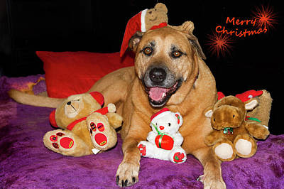 Photograph - Merry Christmas From Foxy Lady by Miroslava Jurcik